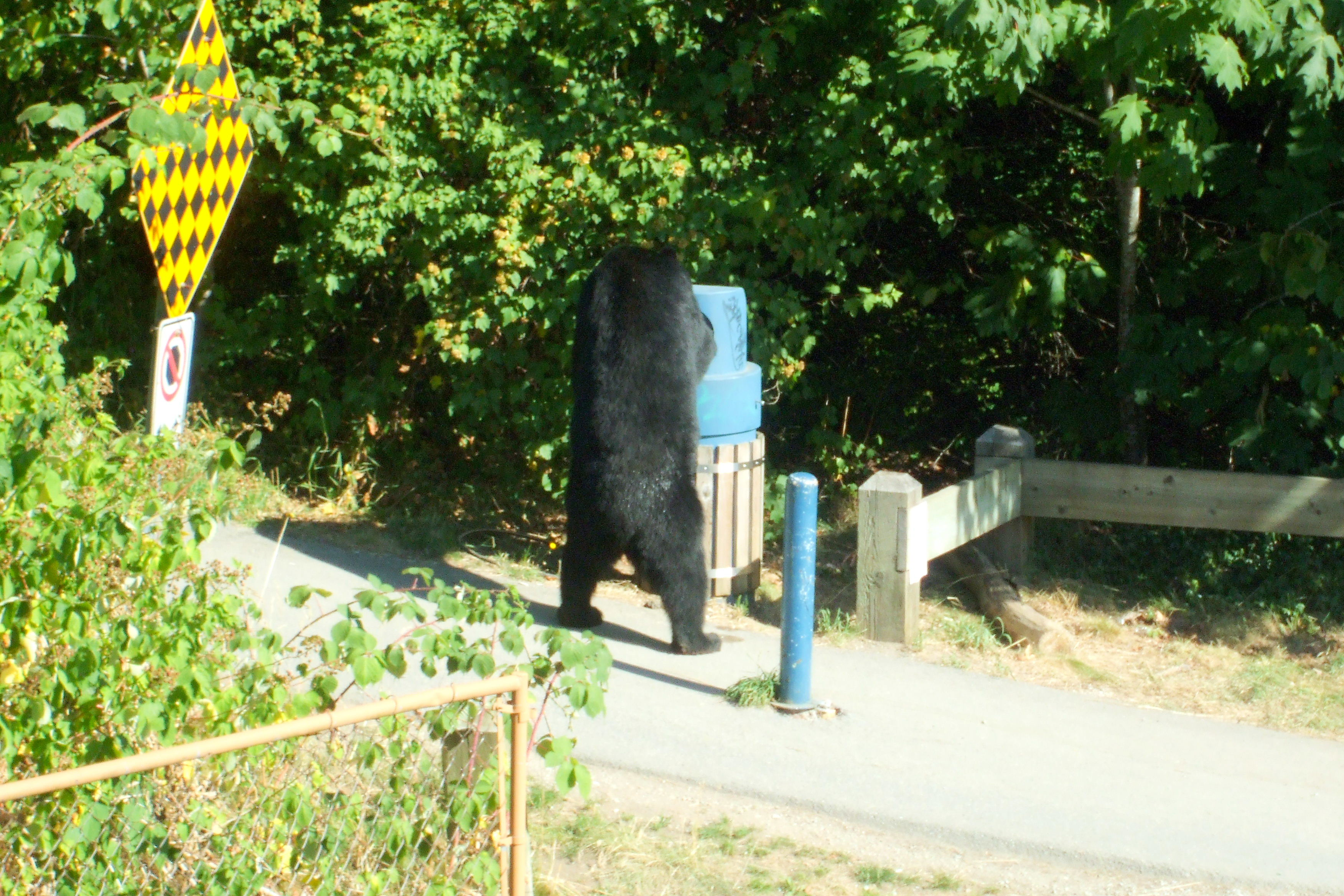 bear in city bin