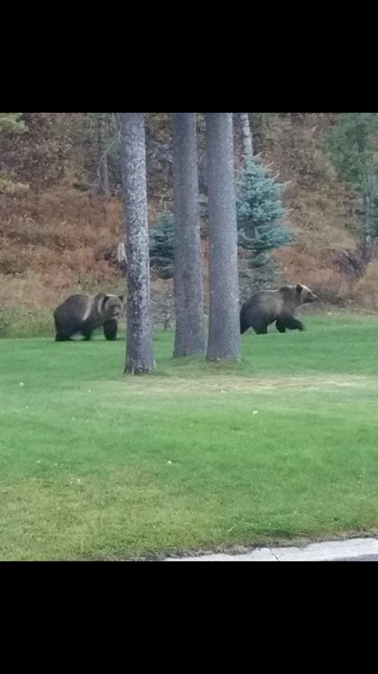 sparwood grizzlies