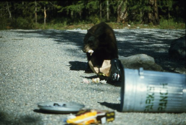60% of calls made to the Conservation Officer Service Hotline cite bears accessing garbage
