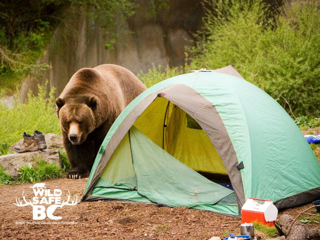 Grizzly-bear_camping_logo-01-1024x768